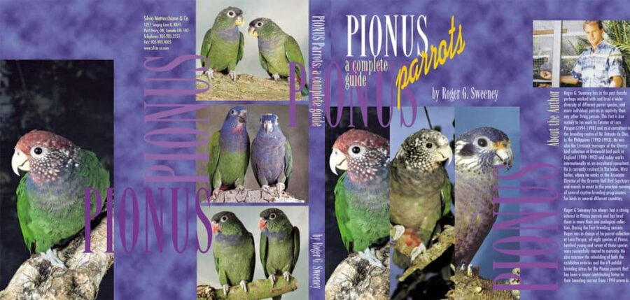 Pionus - A Complet Guide