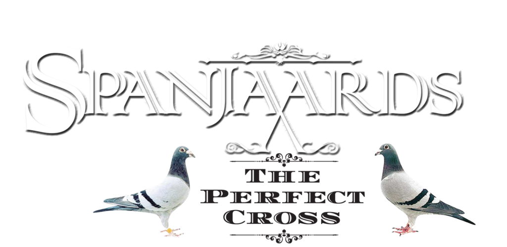 Silvio's Racing Pigeons – SilviosFarm com