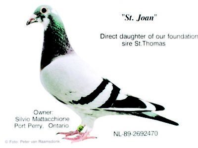 St. Joan Direct Daughter of our Foundation sire St. Thomas