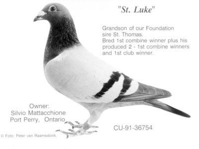 St. Luke Grandson of our Foundation sire St. Thomas