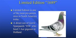 Limited Edition 1689