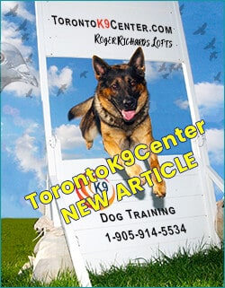 Toronto K9 Center Dog Training by Roger Richards