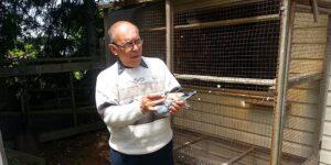 Successfully Breeding Racing Pigeons